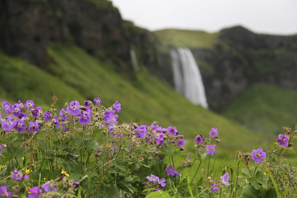 Seljavallalaug & Dyrhólaey ~ #IcelandChallenge Day 2